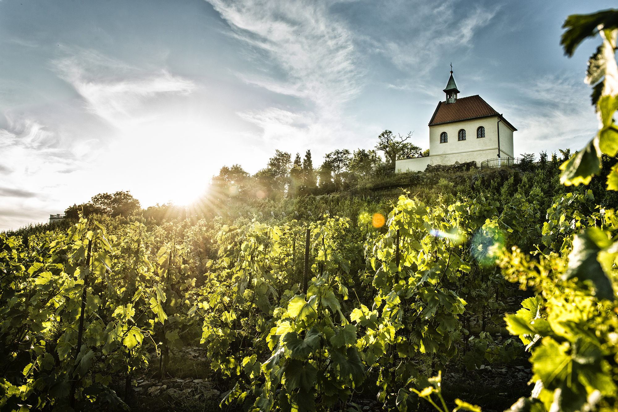 The St Clara Vineyard (Vinice sv. Kláry) - Prague.eu