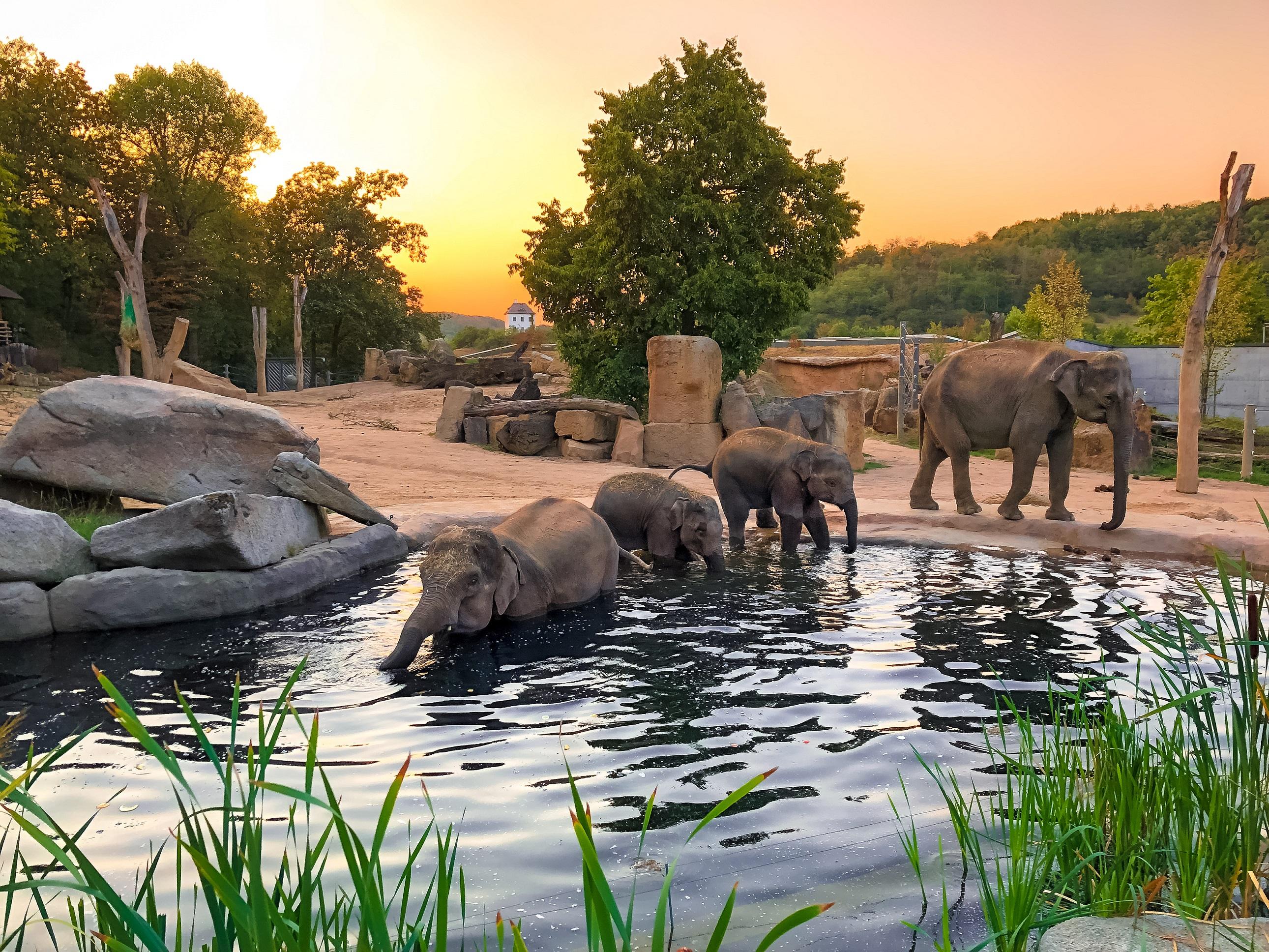 Zoologico de Praga (Zoologická zahrada hl. m. Prahy) - Prague.eu